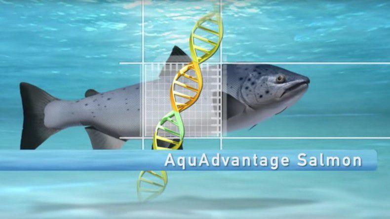 Le «Frankenfish» : premier animal génétiquement modifié autorisé à la consommation aux Etats-Unis Ob_c16e24_564e3b06c361889f5e8b458e