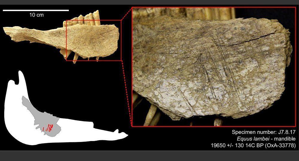 Amérique: L'homme est apparu sur le continent 10.000 ans plus tôt qu'on ne le pensait Ob_a7711d_1029637909