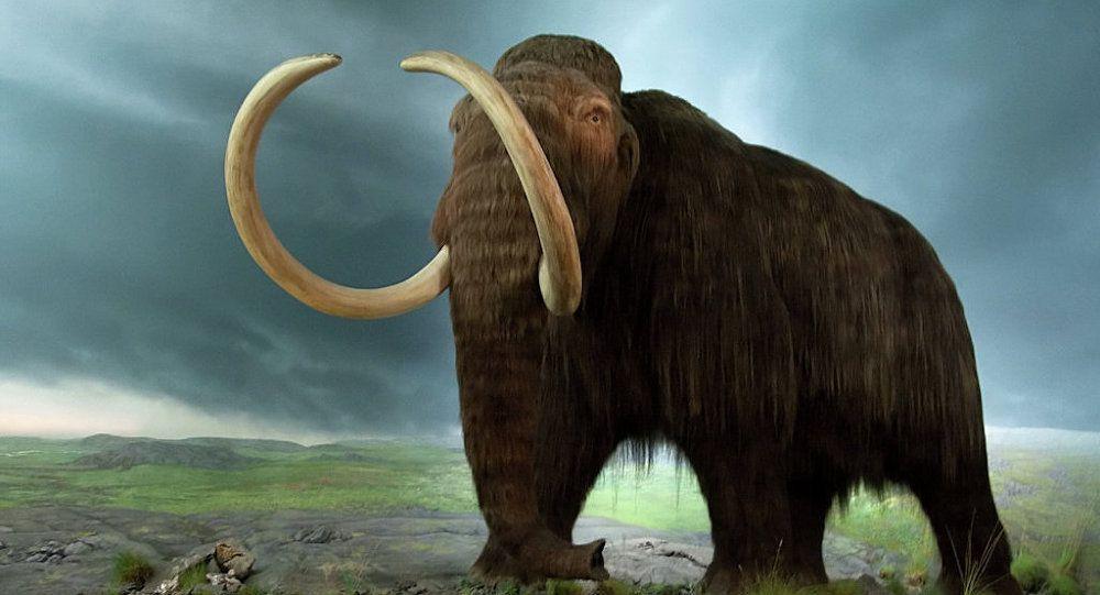 Ressusciter les mammouths: dans deux ans, selon des scientifiques Ob_a4fb7e_1018574672