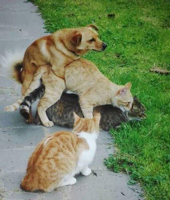 Nos amis, les animaux(quand ils font semblant d'être bête) - Page 5 Ob_8cbe6c_galerie-images-droles-insolites-et-s