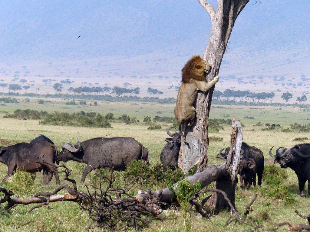 Nos amis, les animaux(quand ils font semblant d'être bête) - Page 5 Ob_a1e458_galerie-images-droles-insolites-et-s
