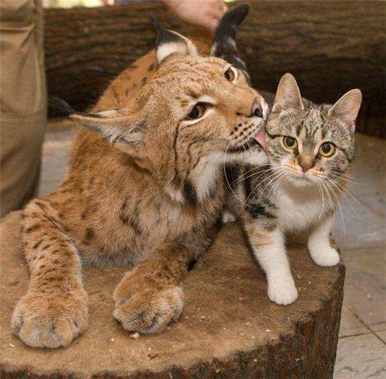 Nos amis, les animaux(quand ils font semblant d'être bête) - Page 5 Ob_be30c3_galerie-images-droles-insolites-et-s