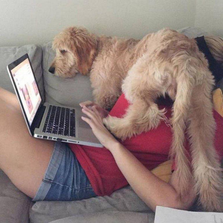 Nos amis, les animaux(quand ils font semblant d'être bête) - Page 6 Ob_9341ff_galerie-images-droles-insolites-et-s