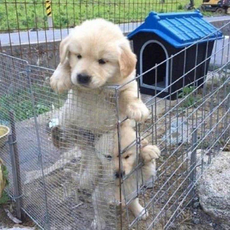 Nos amis, les animaux(quand ils font semblant d'être bête) - Page 8 Ob_dab063_galerie-images-droles-insolites-et-s