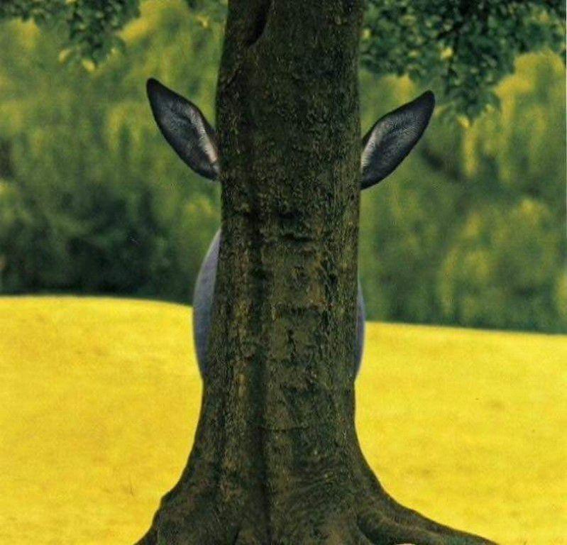 Nos amis, les animaux(quand ils font semblant d'être bête) - Page 8 Ob_ef72b6_galerie-images-droles-insolites-et-s