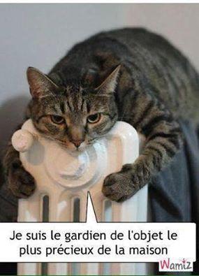 Une vie de chat Ob_4a8dca_chat-humour-1