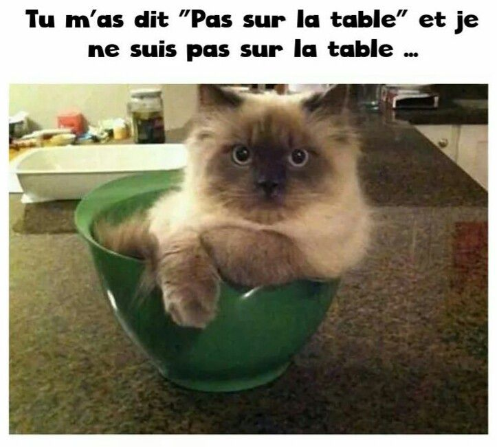 HUMOUR : le chat dans tous ses états - Page 38 Ob_5335d4_chat-humour-5