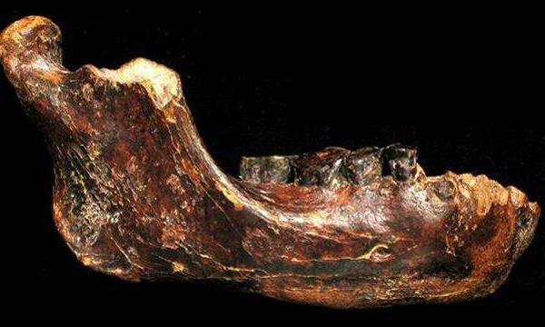 Une nouvelle espèce humaine pourrait avoir été découverte à Taïwan Ob_b4a537_xvm161848da-d0c5-11e4-970a-e4f9d454aab