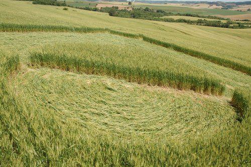 Crop circle et ovnis à Riolandia au Brésil Ob_900b8e_crop-riolandia