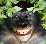 [NPC & Cie]    ENDUROPAL 2013      02 et 03 Février. - Page 4 Bonobo2