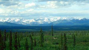 Une famille russe a vécu dans la nature pendant 40 ans et n'a pas entendu parler de la seconde guerre mondiale Taiga-plain-via-Wikipedia-615x345