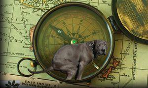 Les chiens s'alignent selon un axe Nord-Sud pour leur grosse commission ! Chiens-alignement-axe-nord-sud-grosse-commission