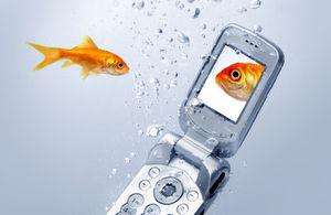 Comment Réparer Un Téléphone Portable Qui A Pris L'eau Portable-eau