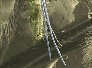 Le monde merveilleux des insectes - Page 4 Membracides-20--Suceurs