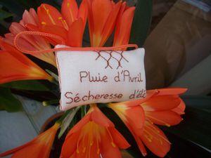 ***Photos - Coussinet de printemps échange 1er avril 2011*** TERMINE *** - Page 2 103_0381-copie-1