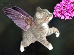 Avec un peu de recul Chat-ailes