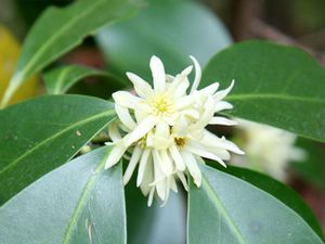 une fleur de Martin 24 septembre trouvé par Ajonc Badiane-en-fleurs