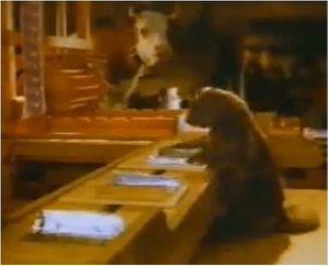 News Marmotte-met-le-chocolat-dans-le-papier-alu-2