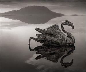 Un mystérieux lac africain pétrifie les animaux M
