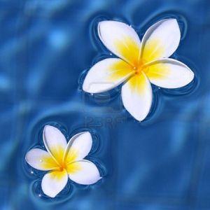Top secret ..Top secret chuutt - Page 3 5450585-deux-fleurs-de-frangipanier-flottant-sur-l-39-eau-b