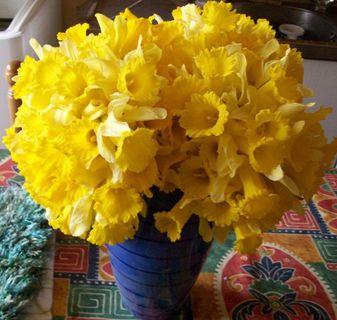 Fleurs,....fruit,.....tout ce qui se mange,...se boit....ou qui vient de la nature.......... - Page 5 Bouquet-de-jonquille