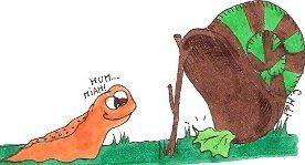le chante-pleure Piege-limace