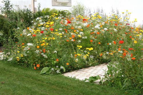Fleurs pour éviter de tondre les bordures Massif-orange--Quimper--29--Jardin-du-Theatre_28202_redim