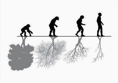 [Jeu] Association d'images - Page 5 Evolution_arbre