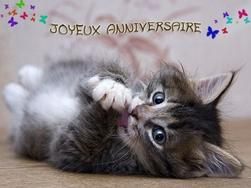 Joyeux anniversaire Elerina Chat-anniversaire-1596140ad6