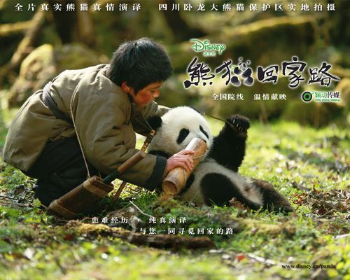 [Walt Disney Pictures Chine] Trail of the Panda  (2009) Wallpaper_02_1280x1024