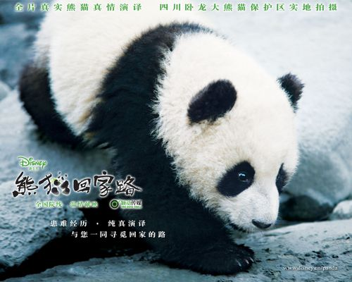 [Walt Disney Pictures Chine] Trail of the Panda  (2009) Wallpaper_03_1280x1024