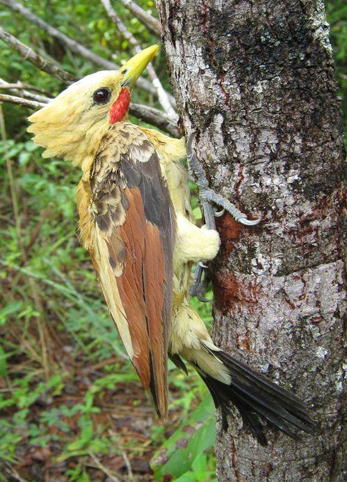 Oiseau Martine 15/02/2015 trouvé par Ajonc Ddd-015