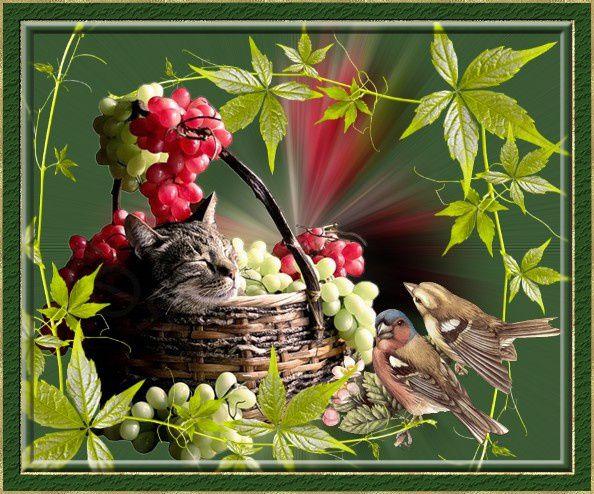 Bon Mardi Chats-et-oiseaux