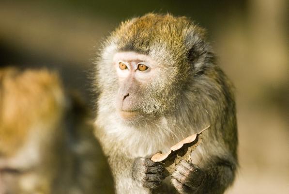 Un animal - Blucat - 4 Novembre trouvé par Martine Macaque-crabier--9-