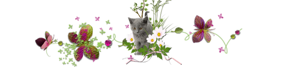 Bon Mardi Separateur-chat