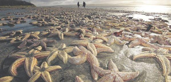 Étrange pluie le 1 Janvier 2011 - Page 16 Starfish_138961a