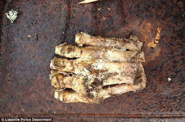 Découverte d'un pied de bigfoot en décomposition ! Article-2312876-196D4FB0000005DC-954_634x417