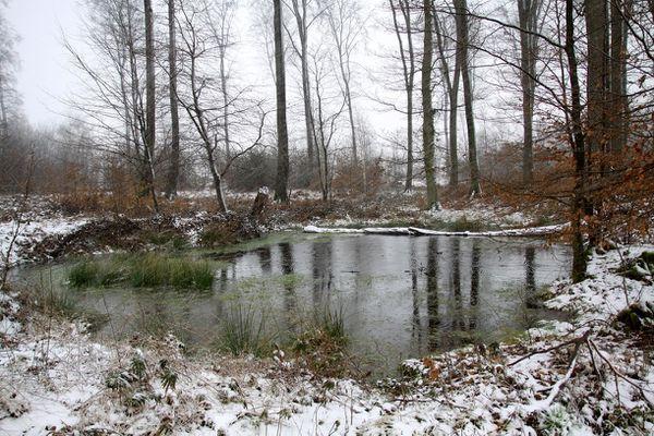 Bon Jeudi Mare-dans-la-futaie-en-neige-1MP01