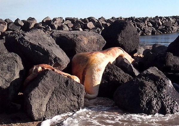 Une espèce inconnue de 4m découverte sur une plage du sud de la France 2013-12-30_004338_5t6y