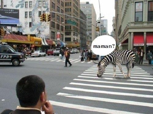 Nos amis, les animaux(quand ils font semblant d'être bête) - Page 7 Maman