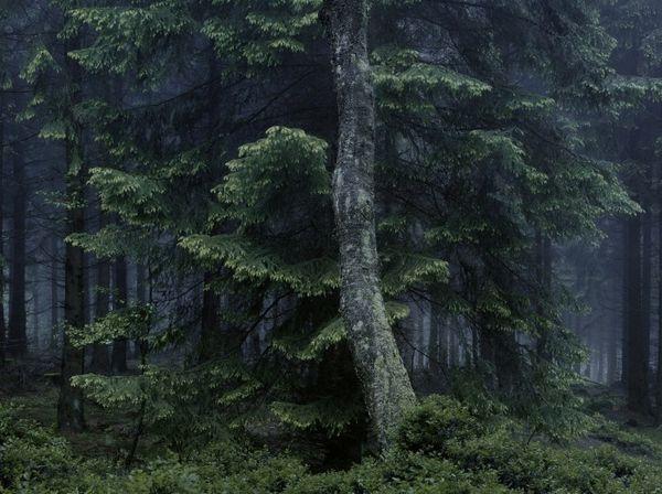 C'est de toute beauté : sites et lieux magnifiques de notre monde. Foret-allemagne-Michael-Lange-01-700x523