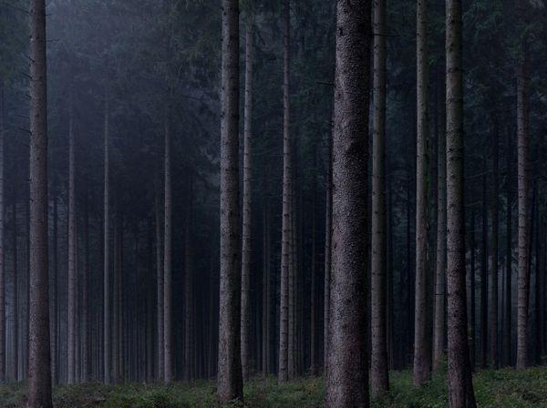 C'est de toute beauté : sites et lieux magnifiques de notre monde. Foret-allemagne-Michael-Lange-07-700x523