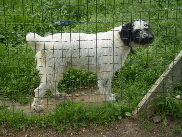 RUSTY croisé Griffon 16 ans   -  Refuge de PONTHIEU MARQUENTERRE (80) B--rusty-ne-le-01-05-99.-1657-1