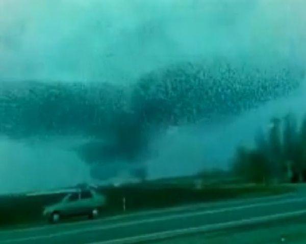 Les implications d'un éventuel contact avec des Extraterrestres - Page 3 Oiseau