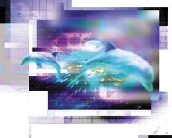 Les implications d'un éventuel contact avec des Extraterrestres Dauphin