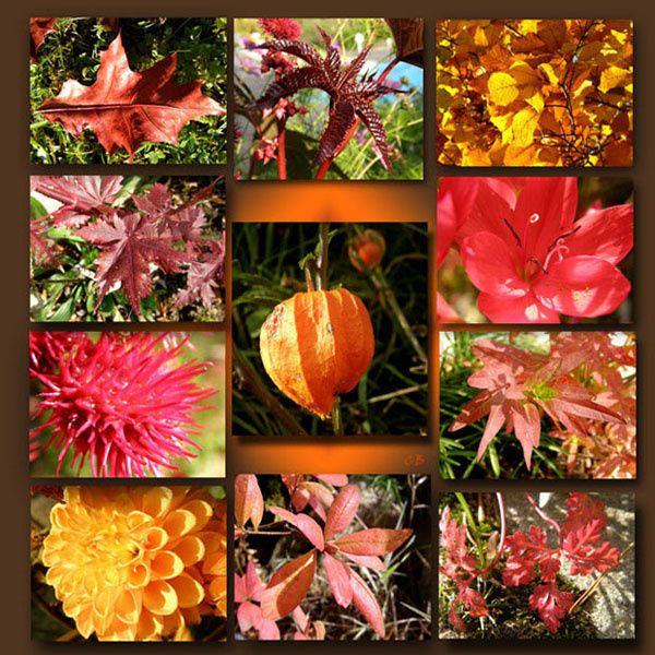 Bonne Vendredi Mur-couleur-automne-w