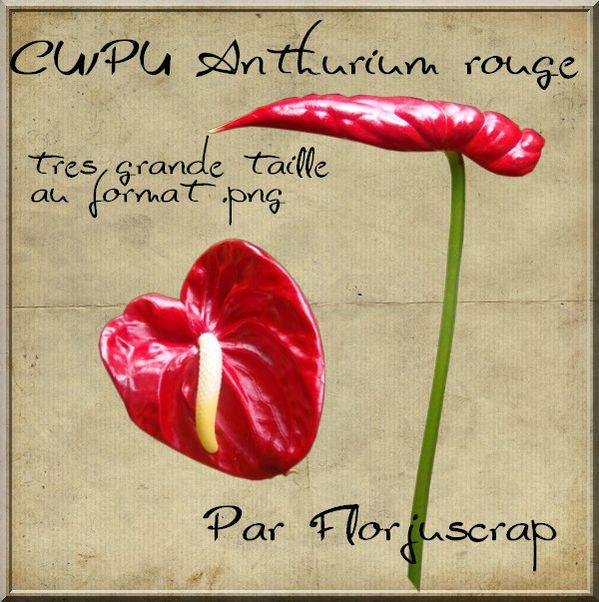 CU/Pu fleur anthurium rouge Preview-anthurium
