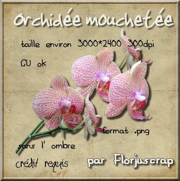 Orchidée Preview-orchid-e-