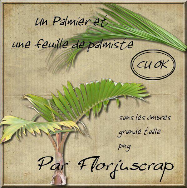 CU Palmier ... Preview-palmier