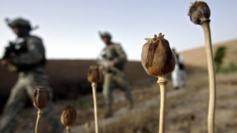 Afghanistan. La production d'héroïne a été multipliée par quarante depuis l'intervention de l'OTAN AFP_090206afghanistan_pavot_opium_8
